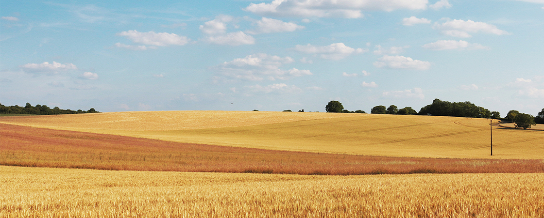 农村金融挑战重重,农分期如何撬动这块金矿