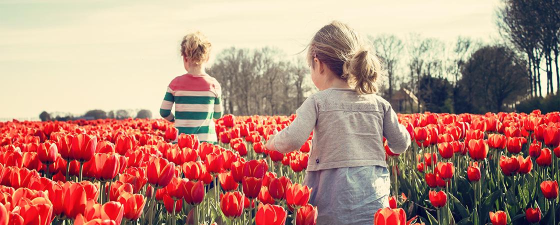芝兰玉树联合创始人王时光:生态建设起来后,内容平台的春天就不远了|人物访谈