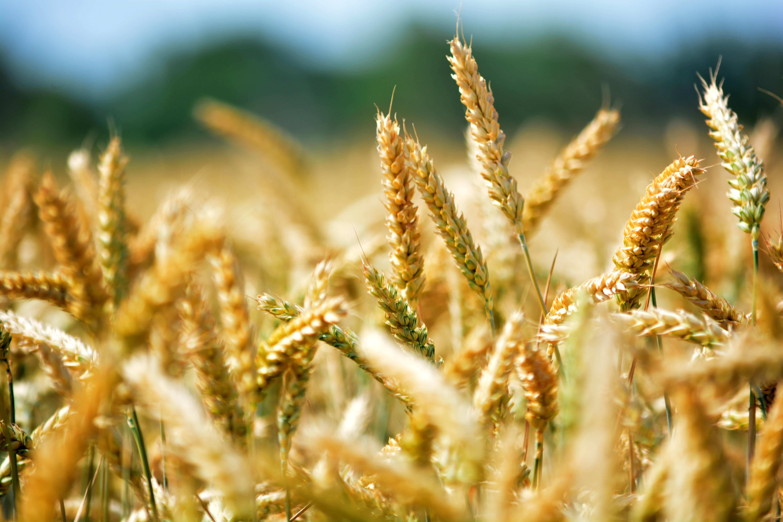 服务农业产业链,农管家将金融嵌入农户经营 | 爱分析调研