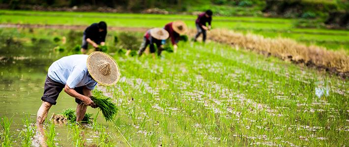 抓住土地流转机遇,农管家创新农村金融玩法 | 爱分析访谈